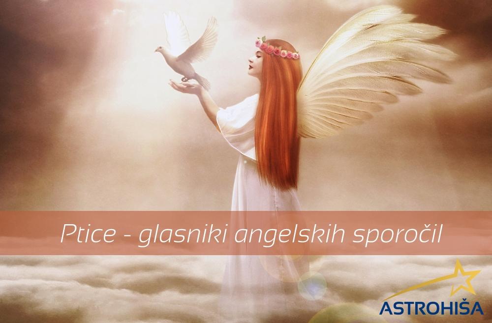 Ptice_prinasalci_angelskih_sporocil_Astrohisa